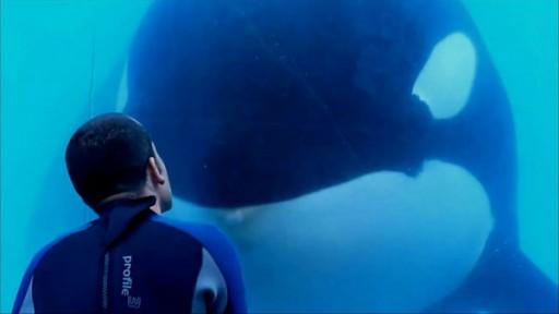 blackfish-512x288