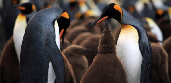 penguins3d02