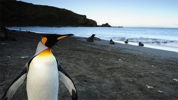 penguins3d03