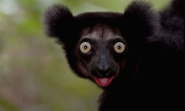 lemurs02