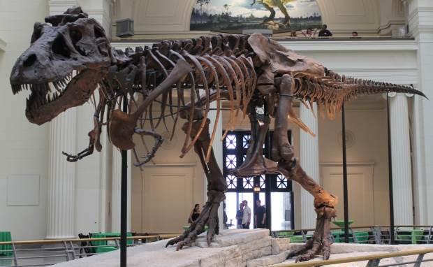 dinosaur13-4