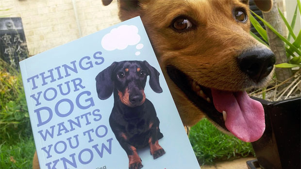 Things Your Dog Wants You To Know Understanding Canine ...