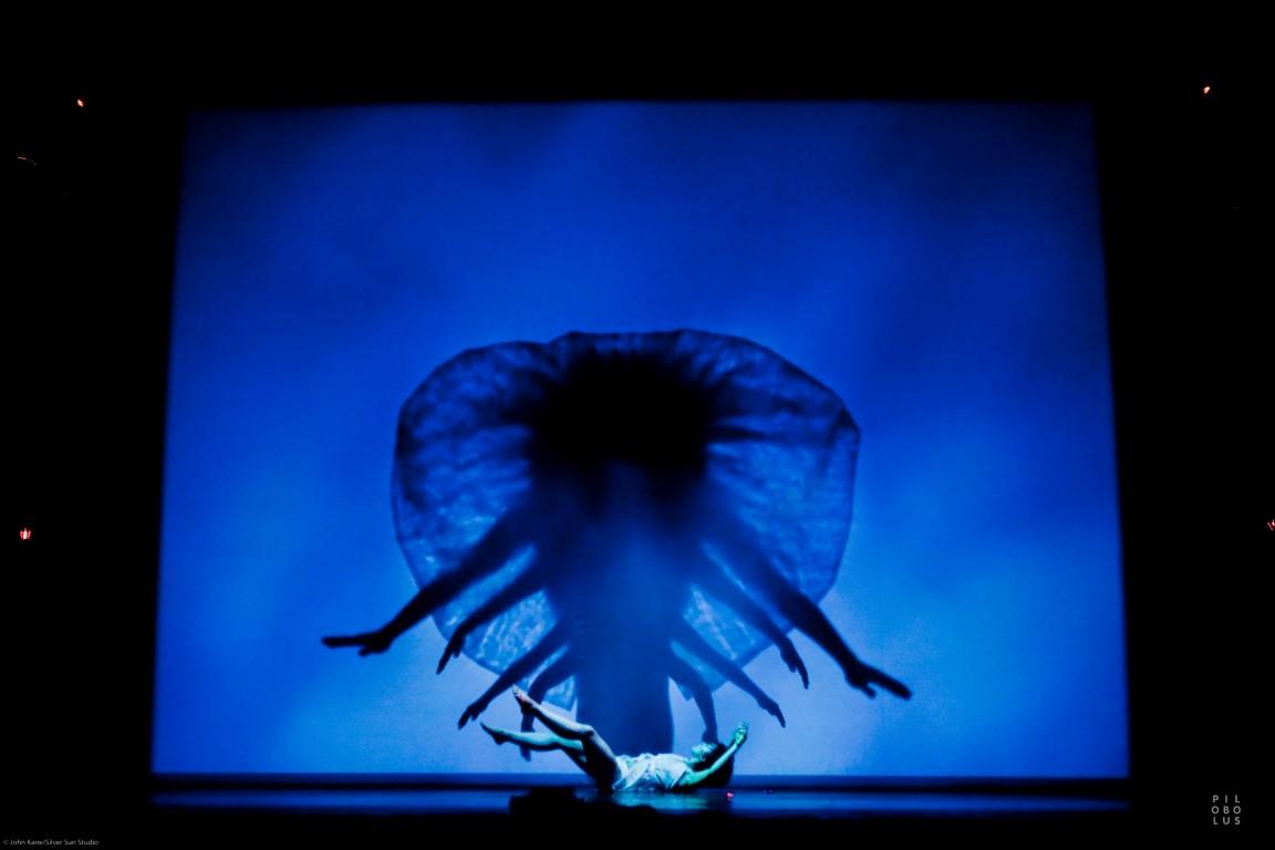 Shadow_Jellyfish_John Kane-445B